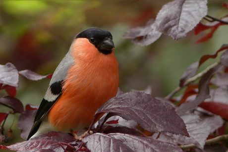 S. Paltanavičius: kur žiedai, ten vabzdžiai ir paukščiai