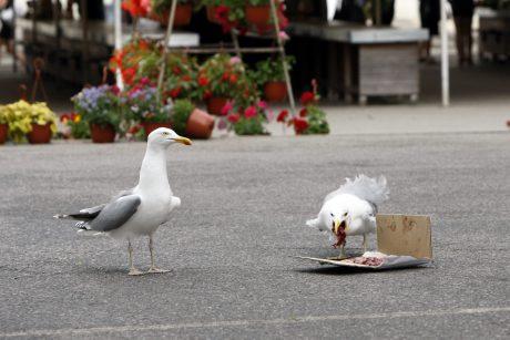 Kirai žuvų skrenda į turgų