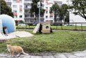 Prapuolė: neseniai benames kates prižiūrintys klaipėdiečiai pasigedo prie Kretingos g. 19 namo stovėjusių, o vėliau į kitą vietą perkeltų oficialių kačių šėryklų.
