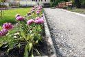 Bernardinų sodas pražys naujomis spalvomis