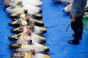Naujajame Tokijo žuvų turguje – pirmasis tunų aukcionas