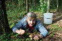 Klaipėdiečius stebina grybų gausa miškuose