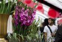 Rugsėjo 1-osios išvakarėse – brangesnės gėlės