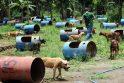 Filipinuose nuo šunų kautynių išgelbėti pitbuliai nebus numarinti