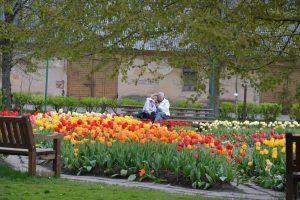 """Kauno botanikos sodas kviečia švęsti """"Augalų žavadienį"""""""