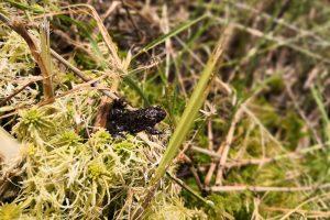 Raudonpilvės kūmutės ir baliniai vėžliai – iš Lietuvos zoologijos sodo į Dzūkiją