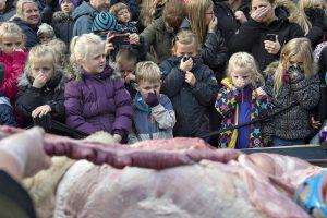 Danijos zoologijos sode liūtas išdarinėtas vaikų akivaizdoje