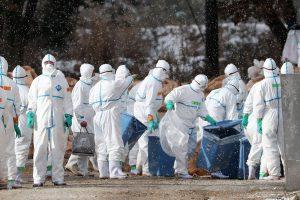 Japonijoje dėl paukščių gripo bus sunaikinta 330 tūkst. paukščių