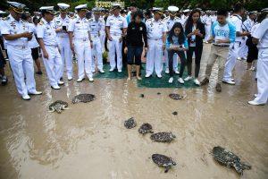 Tailando karaliaus gimtadienio proga į jūrą paleisti 1066 vėžliai