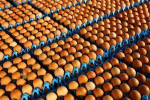 Belgijos ministrai aiškinsis dėl nuodingų kiaušinių