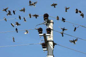 Paukščiai kelia ir nemenkų nuostolių