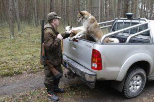 Girulių miškuose šernai pergudravo medžiotojus