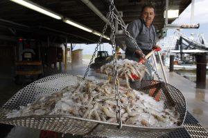 Klaipėdoje ketinama auginti krevetes