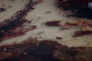 Mįslė gamtosaugininkams: kas į telkinį išpylė nuodingą skystį?