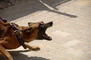 Šiaulių rajone mažametį apkandžiojo šuo