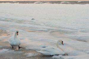 S. Paltanavičius: žiemai taškas dar nepadėtas