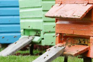 Pasipylė skundai: ūkininkai nuodija bites