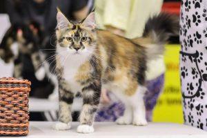 Mylite kates – būtinai užsukite į parodą Vilniuje