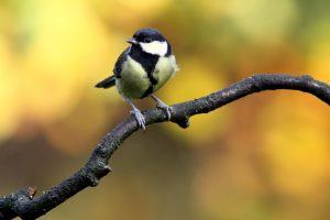 Atžagarus charakteris rudeninei gamtai prirašomas nepelnytai