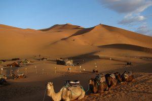 Sacharos dykuma dar neseniai buvo žaliuojanti ir apgaubta ežerų