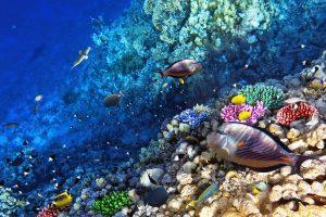 Mokslininkai perspėja apie šylančio klimato grėsmę vandenynams