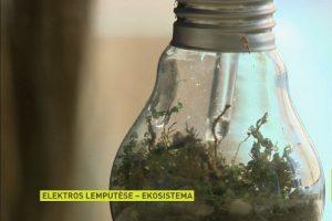 Neįprastas moksleivės ekoprojektas – lemputėje įkurdina sliekus