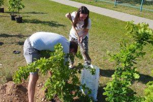 Lietuviai kviečiami sodinti milijoną ąžuolų