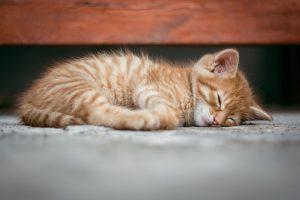 Šiurpu: kaimynas peršovė klaipėdietės katiną