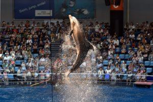Nugaišo ilgiausiai nelaisvėje gyvenęs delfinas