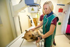 Onkologinėmis ligomis serga ir šunys, ir katės