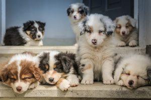 Naminių gyvūnų skiepijimas – sveiko gyvenimo garantas?