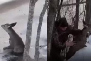 Medžiotojai išgelbėjo ant ledo įlūžusį stirniuką