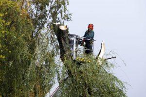 Po audros pajūris skaičiuoja nuostolius