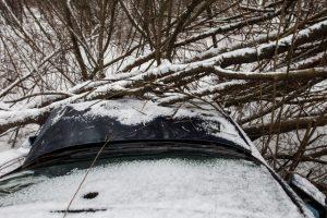 Įtempta para ugniagesiams: 27 kartus vyko šalinti nuvirtusių medžių