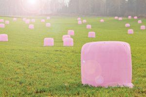 Rožiniai ritiniai laukuose ragins tikrintis dėl krūties vėžio