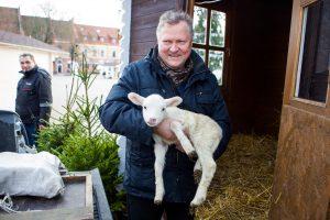 Pažadėta avis: iškepti ar išsaugoti? (apklausa)