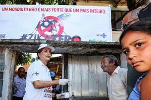 Zikos virusą sustabdys genetiškai modifikuoti vabzdžiai?