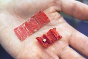 Iš kiaulės žarnos sukūrė miniatiūrinį robotą, pašalinantį prarytus svetimkūnius