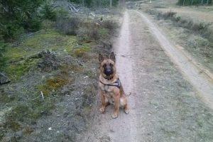 Pasieniečių šuo padėjo rasti tūkstančius pakelių rūkalų