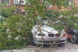Kauno centre ant BMW užvirto medis