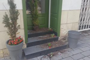 Kaunietė prašo pagalbos: padėkite surasti augalų niokotojus