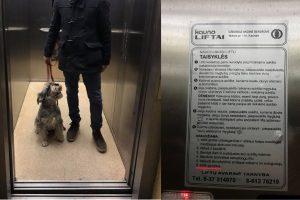 Stebisi situacija daugiabučiuose: šeimininkas liftu, šuo – tik laiptais?