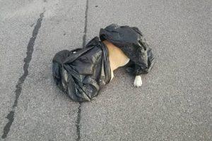 Trūksta žodžių: žiauriai sumušė ir į konteinerį išmetė šunį, jį teko užmigdyti