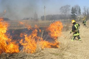 Lietuvoje pradėjo liepsnoti pernykštė žolė