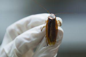 Kaip apsisaugoti nuo ligas pernešančių tarakonų?