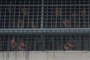 Airijoje apsivogę lietuviai kalėjime praleis tik savaitę