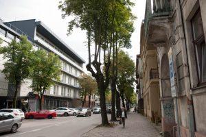 Galutinės išvados dėl A. Mickevičiaus gatvės medžių: siūlo šalinti beveik pusę