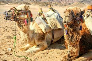 Egiptas 2,5 karto didina atvykimo mokestį