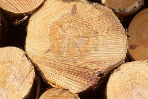 Šiemet neteisėtai miškų kertama mažiau