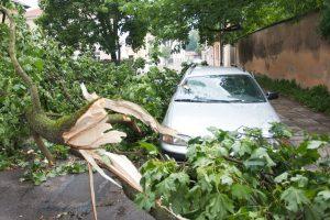 Vėjas ir lietus vėl pridarė nuostolių: išversti medžiai, apsemta šarvojimo salė